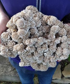 Desert Rose Selenite Cluster